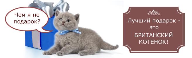 Продаются битанкие котята - потомки знаменитого кота Сундука!